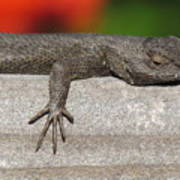 Lounge Lizard Poster