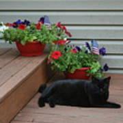 Lounging Black Cat Poster