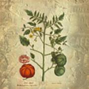 Love Apple Botanical  Poster