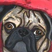 Loveable Pug Poster