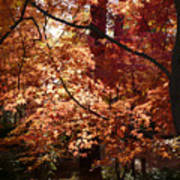 Lovely Autumn Tree Poster