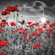 Lovely Field Of Poppies With Sun  Poster