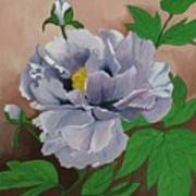 Lovely Peony Flower With Buds Poster