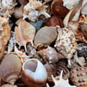 Lovely Seashells Poster