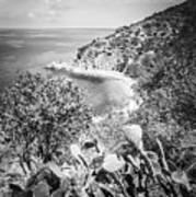 Lover's Cove Catalina Island Black And White Photo Poster