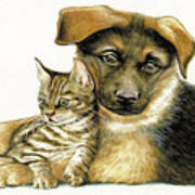 Loving Cat And Dog Poster