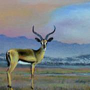 Lowell's Gazelle Poster