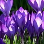Luminous Floral Geometry Poster