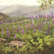 Lupine In Fog, Sugar Hill, Nh Poster
