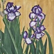 Luscious Iris Poster