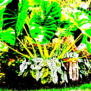 Lush Garden Poster