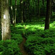 Lush Green At 2 Poster