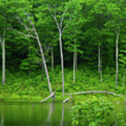Lush Green Pond Poster