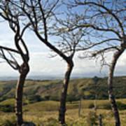 Lush Land Leafless Trees Iv Poster