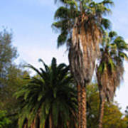 Lush Palms Poster