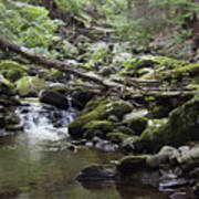 Lush Stream And Canopy Foliage Poster