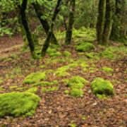 Lush Vegetation Poster