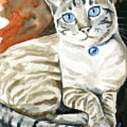 Lynx Point Siamese Cat Painting Poster