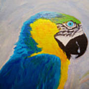 Macaw Head Poster