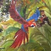 Macaw Parrot 3 Poster