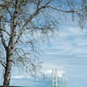 Mackinac Bridge Birch Poster