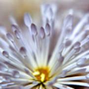 Macro Flower 3 Poster