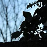 Macro On Leaves Poster