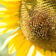 Macro Photography Of Sunflower Poster