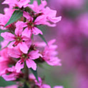 Macro Purple Flower Poster