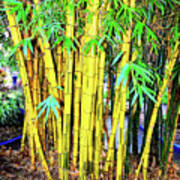 City Park Bamboo Grass Poster