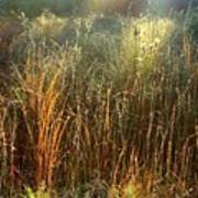Magical Light On The Marsh Poster