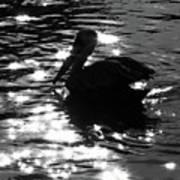 Magical Pelican Poster