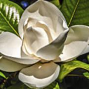 Magnolia Blossom 4 Poster