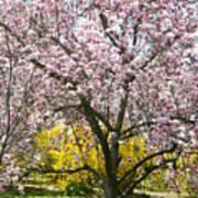 Magnolia Blossoms Galore Poster