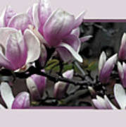 Magnolia Fantasy II Poster