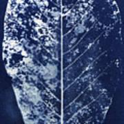 Magnolia Leaf Skeleton Poster