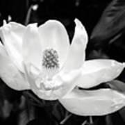 Magnolia Memories 3- By Linda Woods Poster