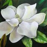 Magnolia Oil Painting Poster