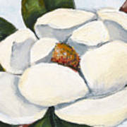 Magnolia On Blue Poster