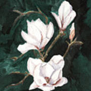 Magnolia Soulangeana Poster