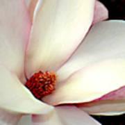 Magnolia Poster