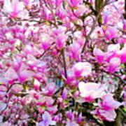 Magnolia Tree Beauty #1 Poster