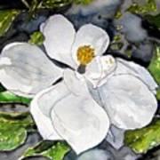 Magnolia Tree Flower Poster