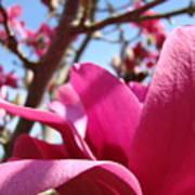 Magnolia Tree Pink Magnoli Flowers Artwork Spring Poster