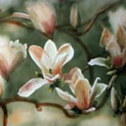 Magnolias In Bloom Poster