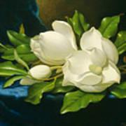 Magnolias On A Blue Velvet Cloth Poster
