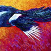 Magpie In Flight Poster