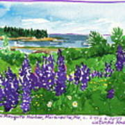 Maine Coast Purple Lupine Art Poster
