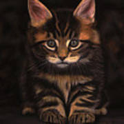 Maine Coon Kitty Poster by Sabine Lackner