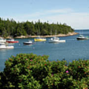 Maine Cove Poster